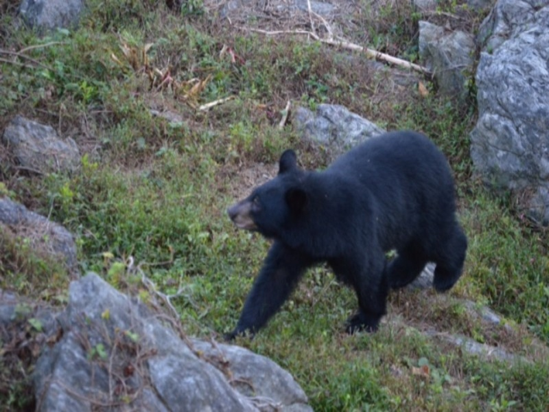 Bear Picture from Deck