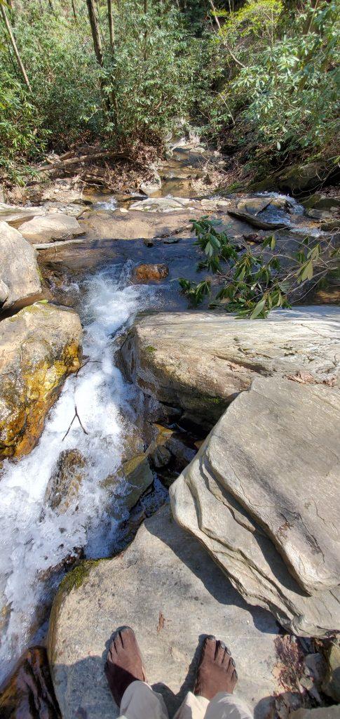 Creek-Flora-and-Fauna